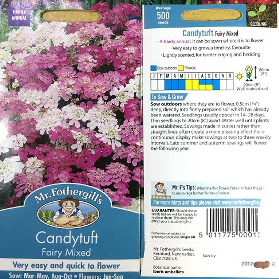 1 Pack 500 Benih Bunga Candytuft Fairy Mixed F1 Mr. Fothergills Bibit tanaman | Shopee Indonesia