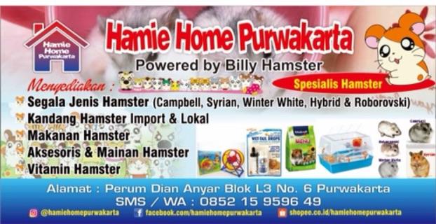 Toko Online Rumah Hamster Purwakarta (HamieHomePurwakarta)   Shopee Indonesia