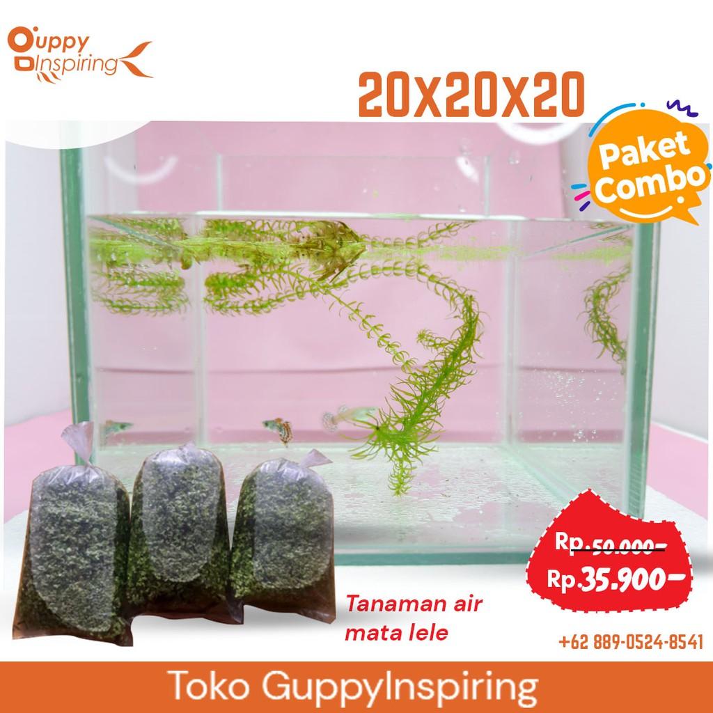 Aquarium 20x20x20