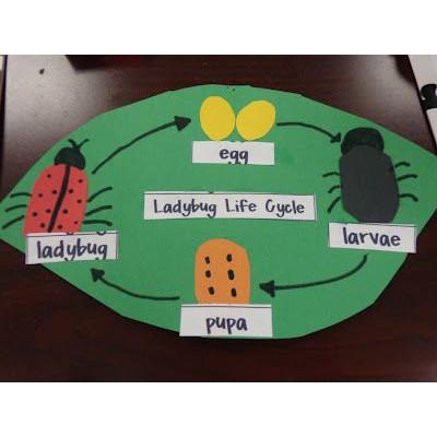 Joy Smart Toys Paket Montessori Life Cycle Ladybug Kumbang Koksi Mainan Edukasi Anak 3 Tahun Shopee Indonesia