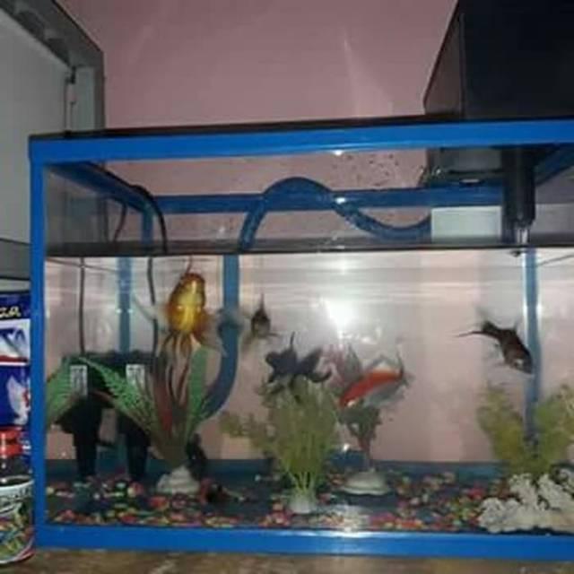 Aquarium Akrilik Fullset Ikan Mas Koki Dan Hiasan Aquarium Shopee Indonesia