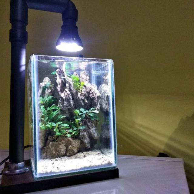 Aquarium Kecil Soliter Ikan Cupang Ikan Hias Kecil Lainnya 10x10x20 Shopee Indonesia