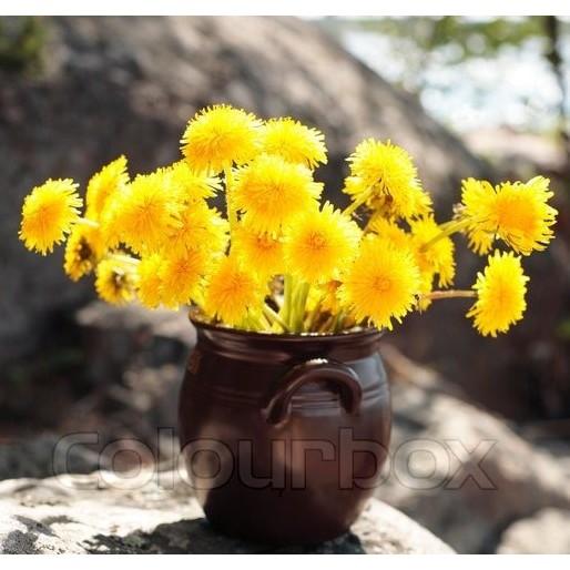 Bibit bunga sedap malam | Shopee Indonesia -. Source · China Aster Mix