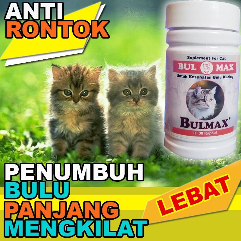 Bm08 Obat Bulu Kucing Persia Anggora Penumbuh Bulu Lebat Panjang Bulu Kucing Anti Rontok Bulmax Shopee Indonesia