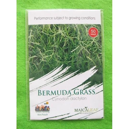 Benih biji rumput Scotts Grass Seed - Biji rumput bermuda | Shopee Indonesia
