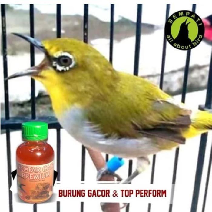 Paling Terpopuler G014057 Nectar Nektar Cair Premium Sempati Vitamin Burung Pleci Termurah Shopee Indonesia