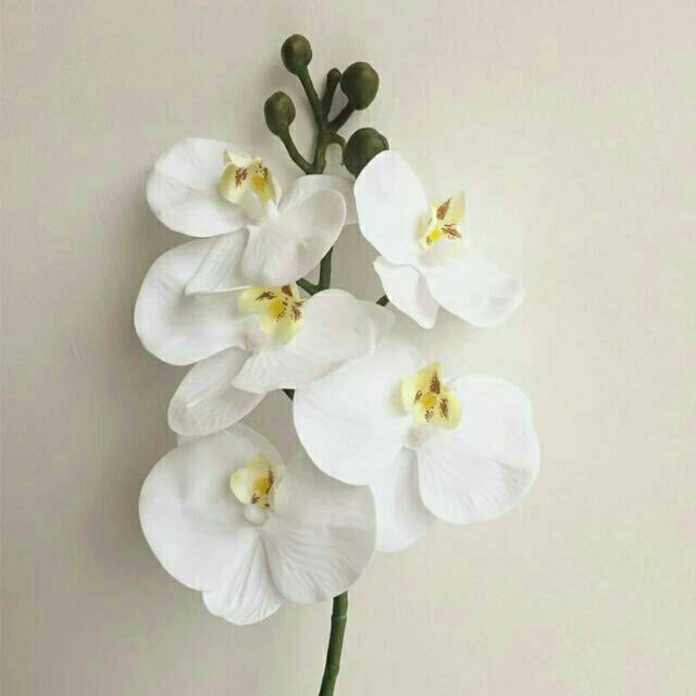 Bunga Anggrek Latex 5 Bunga (Kecil)  dbe87edd13