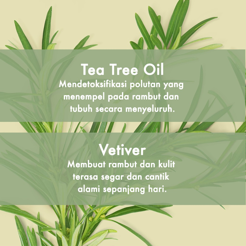 Love Beauty & Planet Radical Refresher, Tea Tree Oil & Vetiver Shampoo 400Ml-3