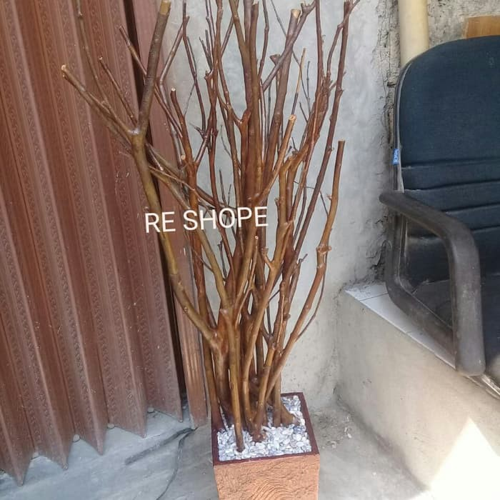 Pohon Ranting Kayu jambu Asli 120cm Berkualitas | Shopee ...