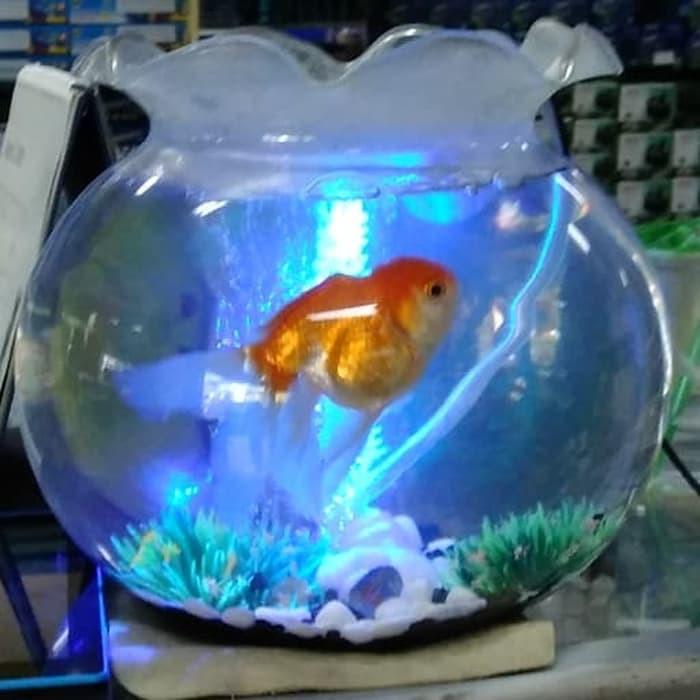 Aquarium Bulat 12l Shella 12 Liter Fish Bowl Toples Ikan Undian Shopee Indonesia