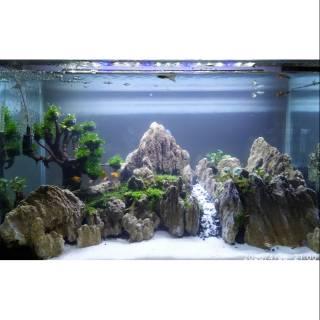 Jasa Design Aquascape Ukuran 30 Cm Shopee Indonesia