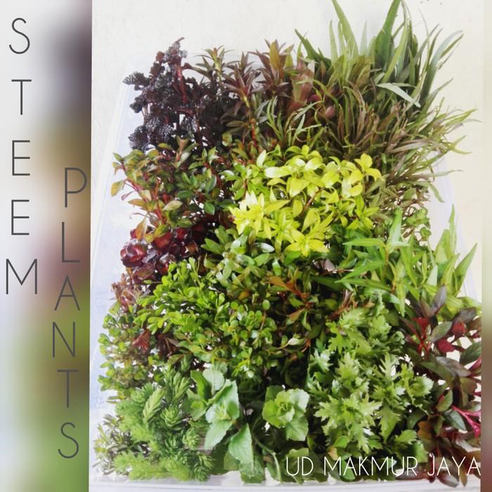 Paket Stem Plant Aquascape 20 Jenis Shopee Indonesia