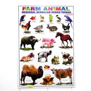 66+ Gambar Binatang Hewan Ternak Terbaik