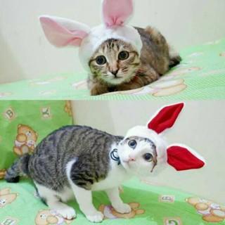 5100 Koleksi Gambar Hewan Kucing Lucu Gratis Terbaru
