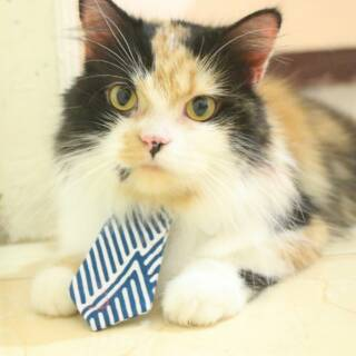 5500 Gambar Hewan Kucing Lucu Dan Imut HD