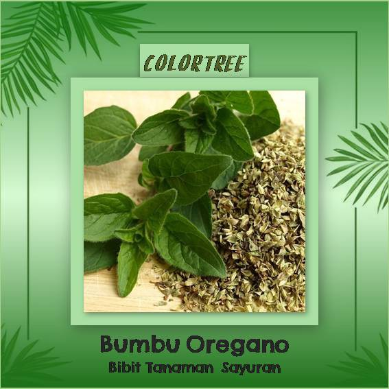 1 Pack 1500 Benih Herbal Oregano Greek Mr Fothergills Bibit Tanaman OBAT sayur sayuran herb | Shopee Indonesia
