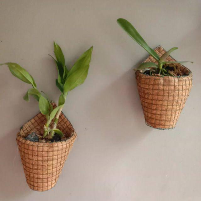 Pot Gantung Anggrek Pot Tempel Pot Sabut Kelapa Dendrobium