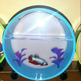 Aquarium Mini Portable Unik Terbuat Dari Akrilik Dan Paralon Type Bulat Plus Bacground Foto Shopee Indonesia