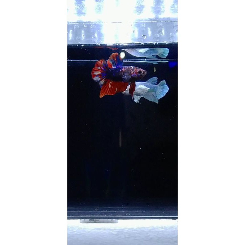 Avatar Nemo
