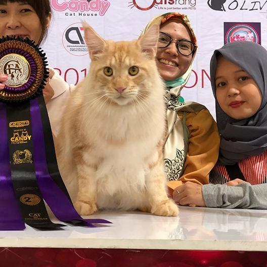 Paling Laris Vitamin Untuk Kucing Flu Problem Mata Ingus Herpes Meningkatkan Imunitas Tubuh Shopee Indonesia