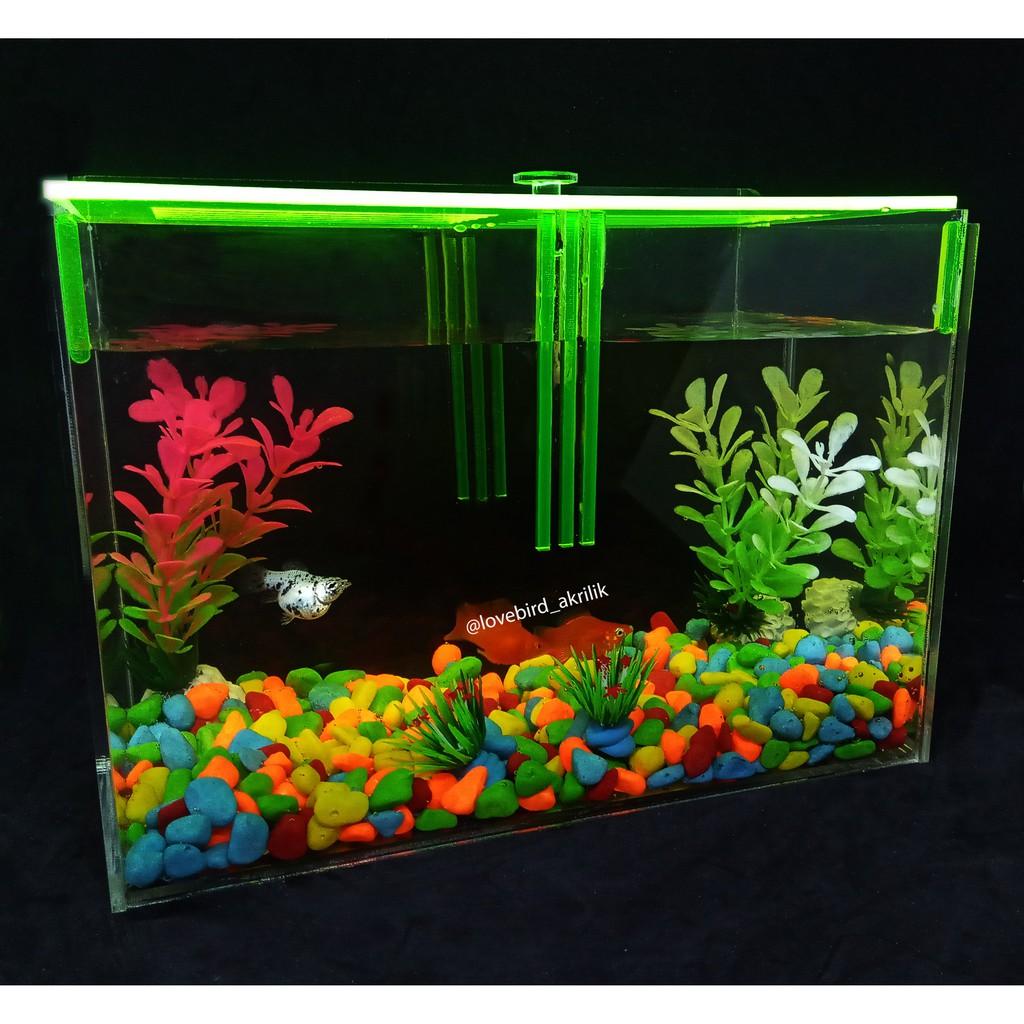 Aquarium Akrilik Aquarium Acrylic Aquarium Ikan Cupang Mini Aquarium Aquarium Mini Aquarium Shopee Indonesia