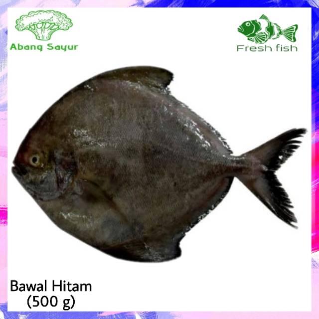 Abang Sayur Ikan Bawal Hitam Air Laut Segar Fresh Fish Black Pomfret Shopee Indonesia