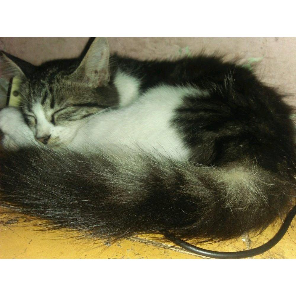 Kucing Anggora Lucu Shopee Indonesia