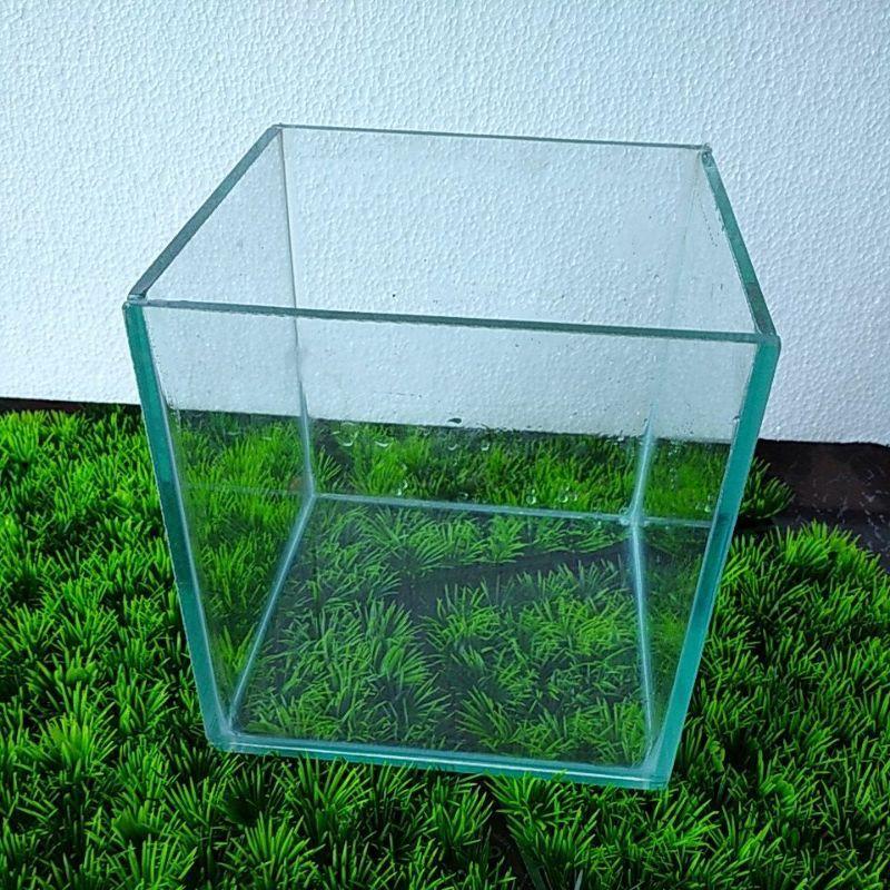 Aquarium 20x20x20 Aquascape