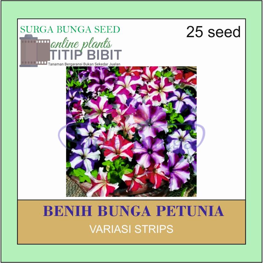 Benih Tanaman Bunga Petunia Strips 10 Seed Shopee Indonesia