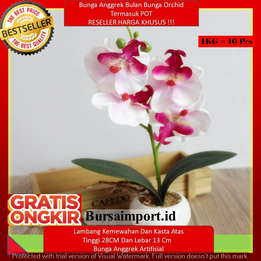 1kg Muat 8 Pcs Bunga Anggrek Bulan Bunga Orchid Bulat Termasuk Pot Putih Shopee Indonesia