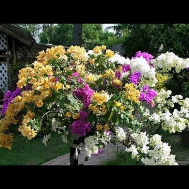 Bibir Bunga Kertas Tiga Warna Shopee Indonesia