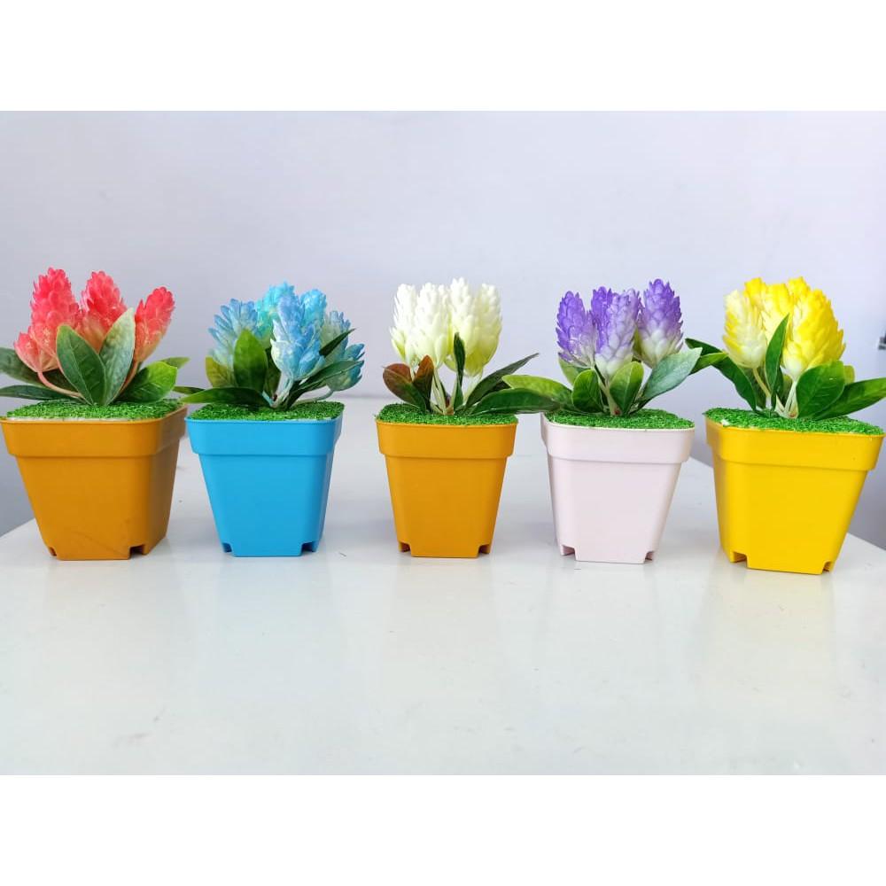 Bunga Lavender Pot Kecil Bunga Hias Bunga Meja Bunga Shopee Indonesia