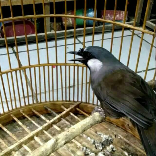 Poksay Hongkong Shopee Indonesia