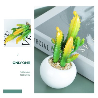 homes bunga hiasan kaktus hias dengan pot plastik tanaman