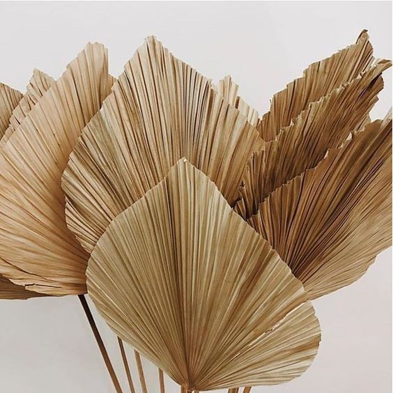Dried Palm Leafs For Rustic Decoration