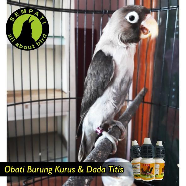 Nyilet Kurus D2k Obat Burung Sakit Kurus Lesu Gangguan Pencernaan Shopee Indonesia