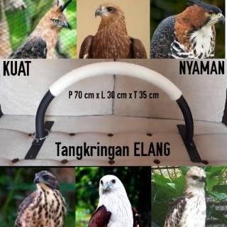 51 Gambar Burung Elang Terkeren Gratis Terbaru