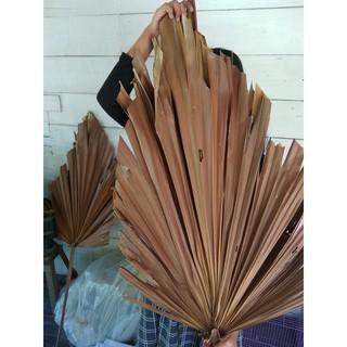 daun palm kering untuk dekorasi rustic (large) | shopee