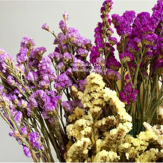 dried flowers dried statice bunga kering asli white cream