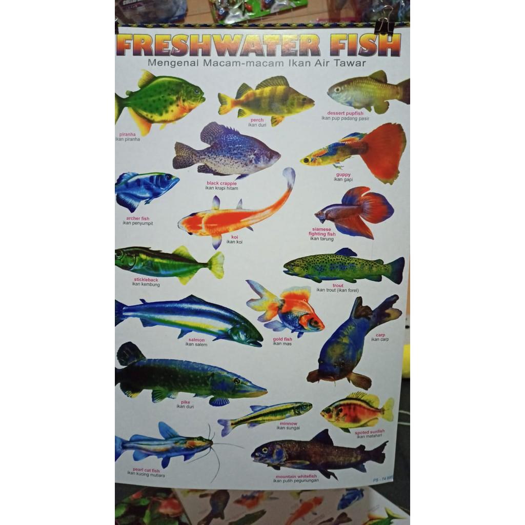 Poster Jenis Ikan Air Tawar P60 Shopee Indonesia
