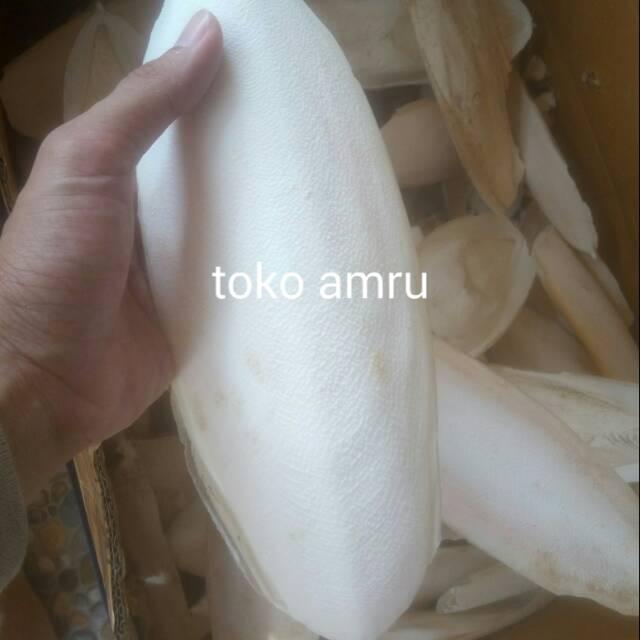 Tulang Sotong Asinan Ukuran Jumbo 25 30 Cm Shopee Indonesia