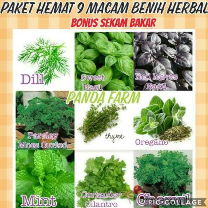 Promo Belanja parsley Online, September 2018   Shopee Indonesia -. Source · 3 Benih
