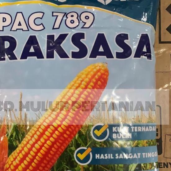Terbaik Benih Jagung hibrida PAC 789 RAKSASA 1Kg Pacific Seeds .. .. ..