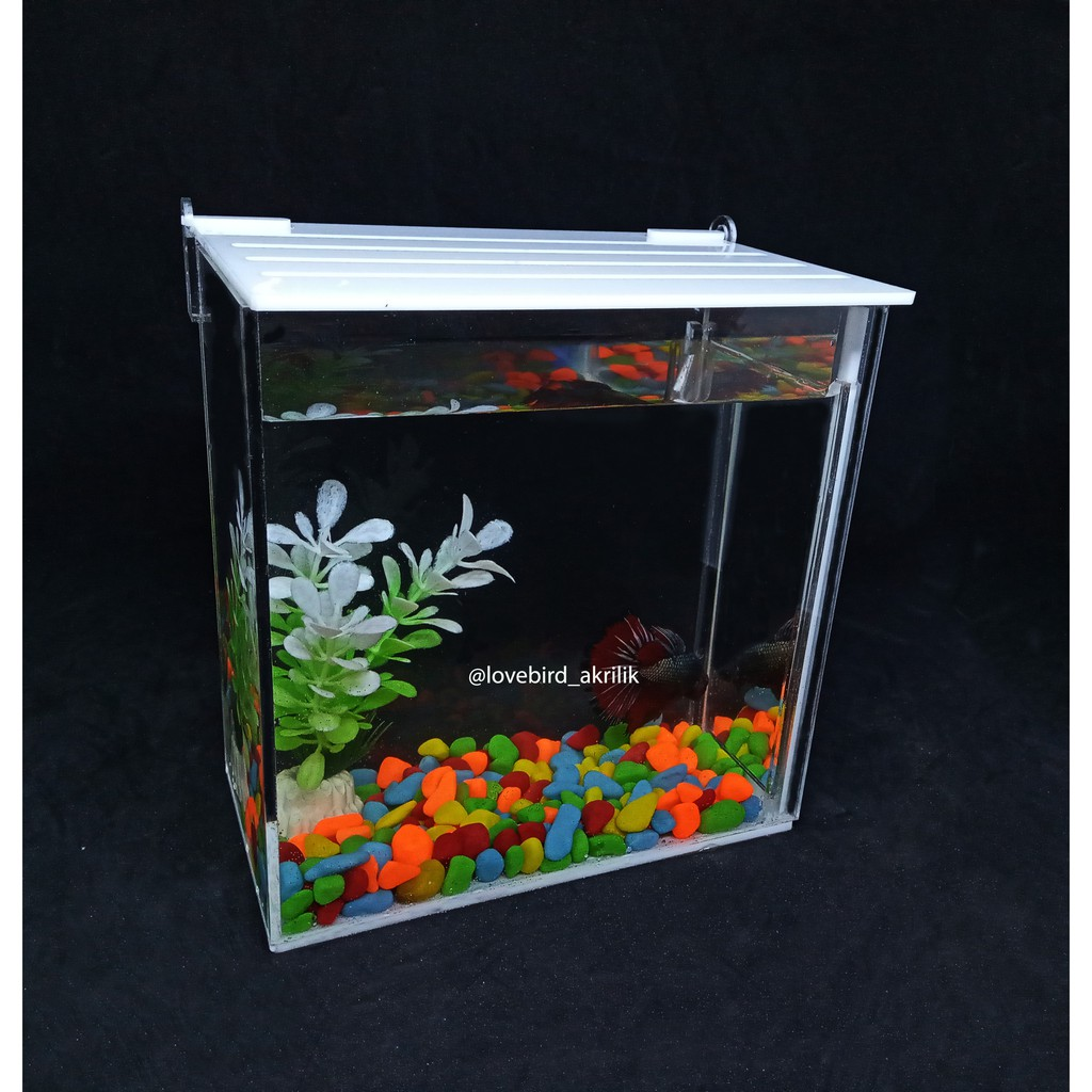 Aquarium Ikan Cupang Aquarium Mini Akrilik Betta Fish Acrylic Aquarium Akrilik Soliter Akrilik Shopee Indonesia