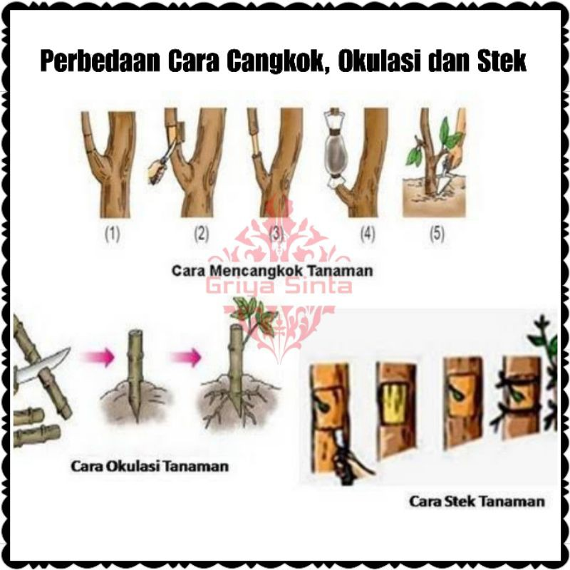 Pisau Grafting Okulasi Cangkok Stek Batang Tanaman Shopee Indonesia
