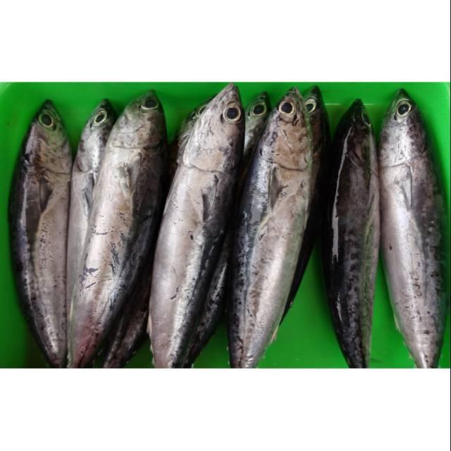 Termurah Ikan Tongkol Batik Kecil 500gr Shopee Indonesia