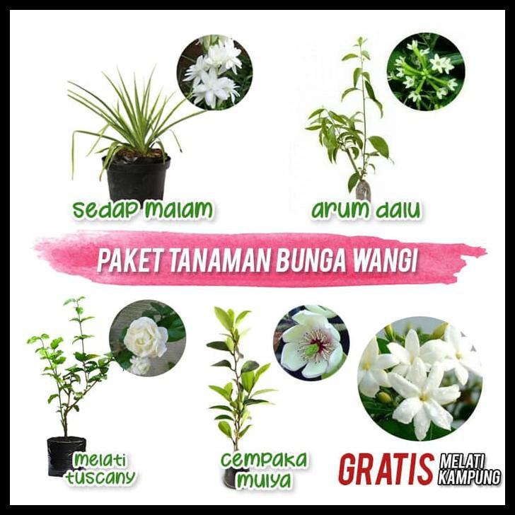 Paket Tanaman Bunga Wangi Shopee Indonesia