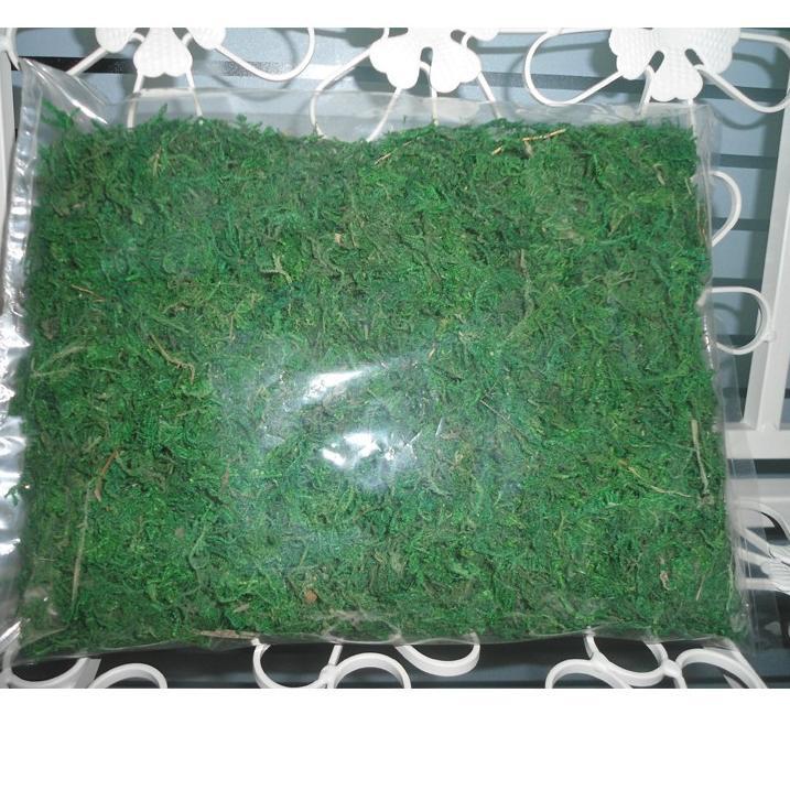 Lumut Artificial Lumut Tabur Lumut Hijau Lumut Kering Shopee Indonesia
