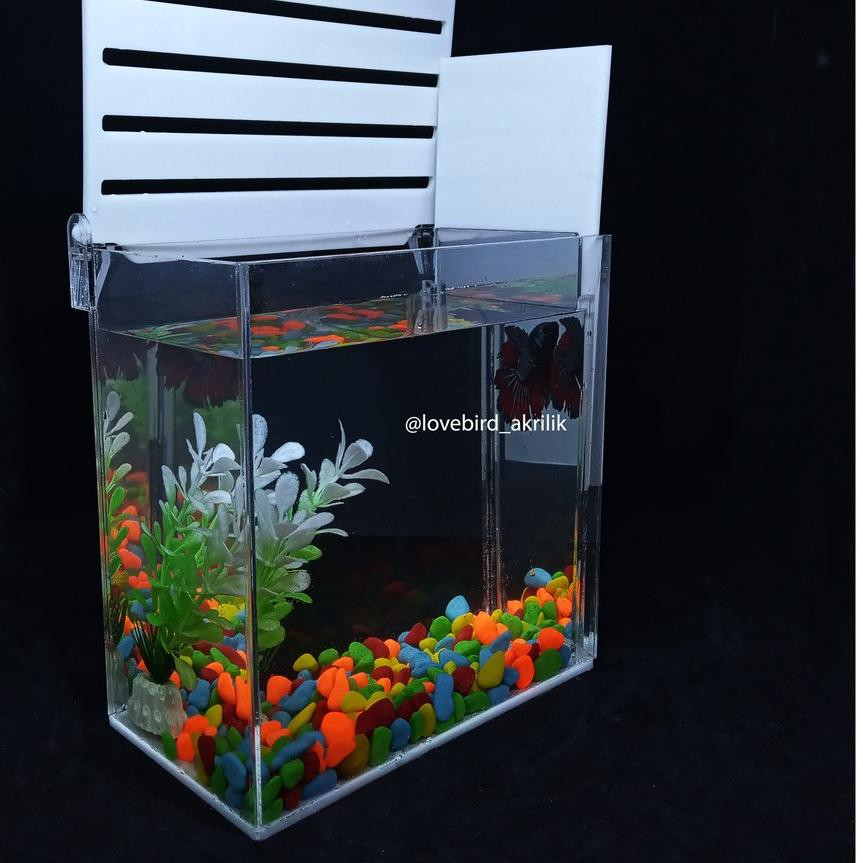 Ldc Aquarium Ikan Cupang Aquarium Mini Akrilik Betta Fish Acrylic Aquarium Akrilik Soliter A Shopee Indonesia