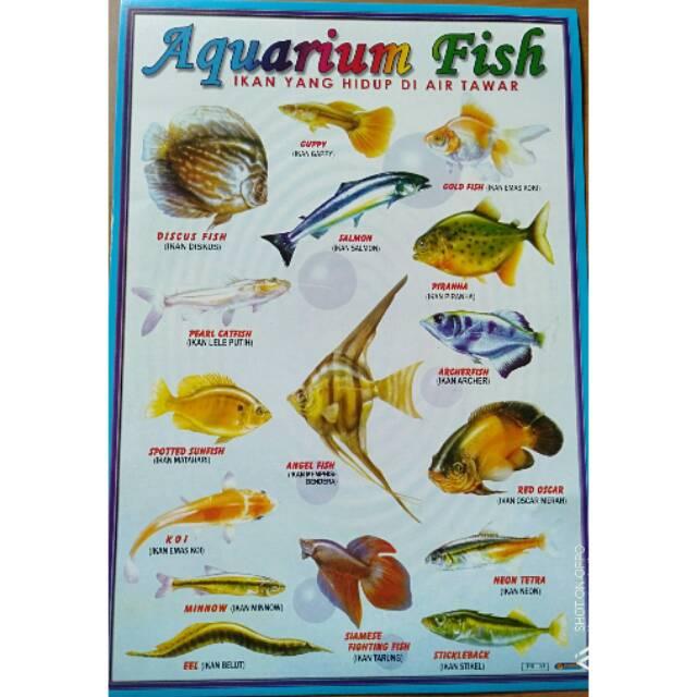 Poster Ikan Air Tawar Aquarium Fish Shopee Indonesia